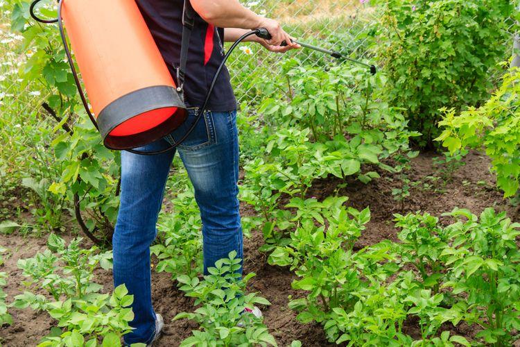 Postrek buriny v okolí zemiakov