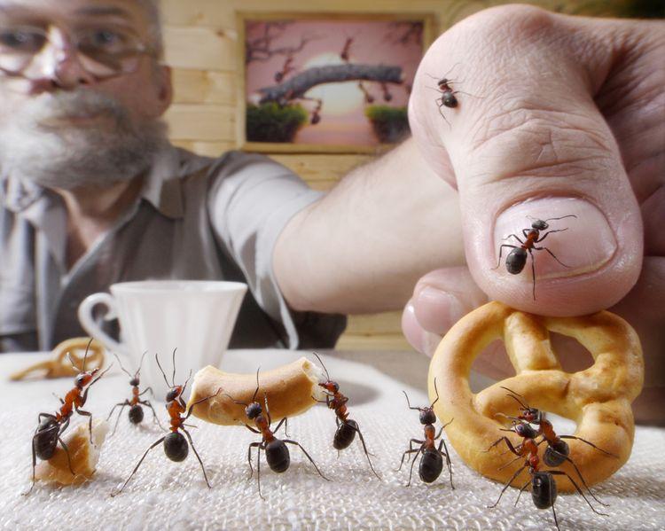 Ako sa zbaviť mravcov?
