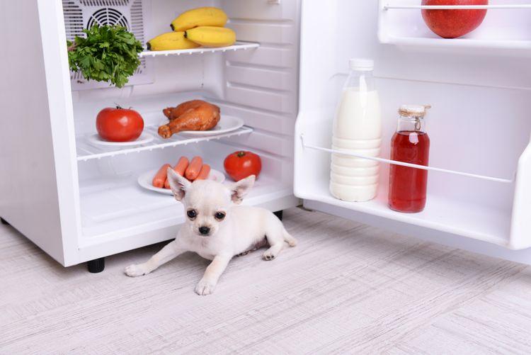 Mini chladnička - ako si ju vybrať?