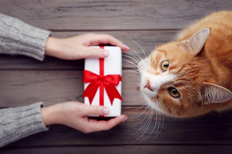 Ako vybrať darček pre domáce zvieratko