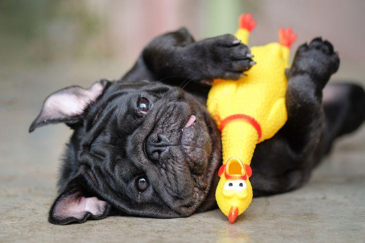 Pes s pískacou hračkou