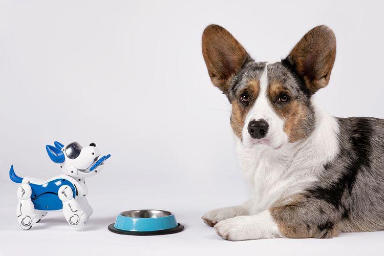 Robotický pes vs. živý pes