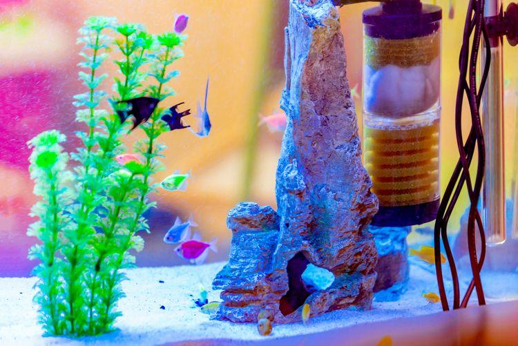 Filter akvária slúži na odstraňovanie škodlivých látok