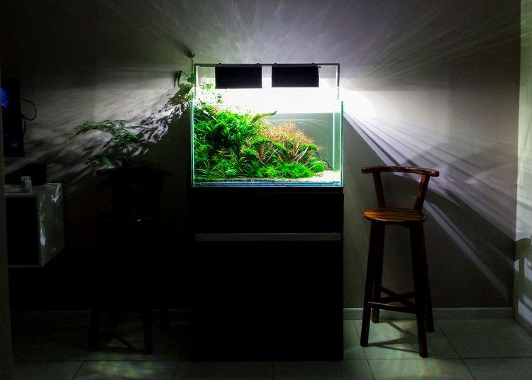 Osvetlené akvárium v obývačke