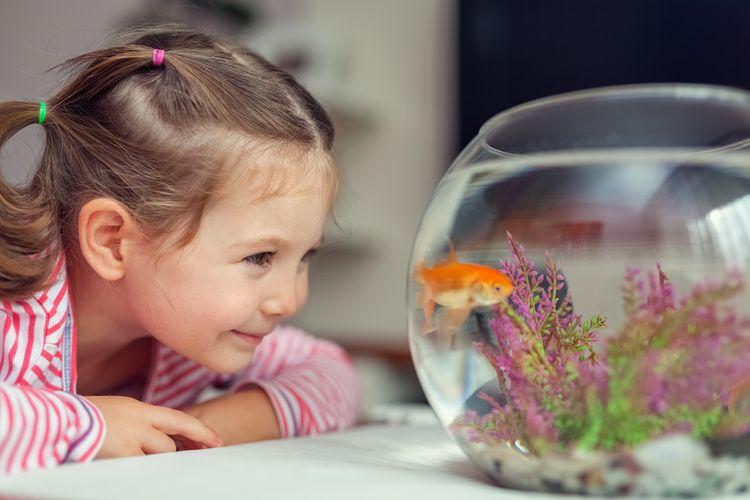 Ako vybrať a ako sa starať o akvárium. Set je vhodný pre začiatočníkov