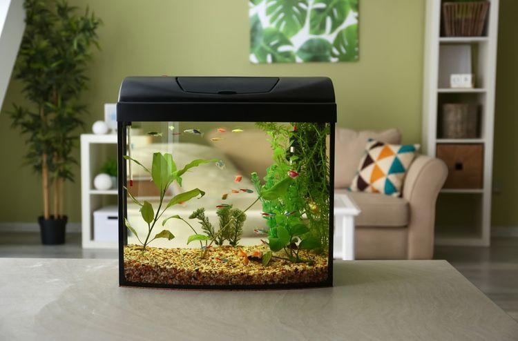 Pre rybky náchylné na choroby je vhodné druhové akvárium