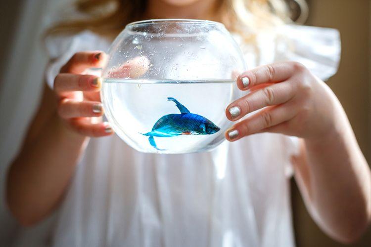 Mini akvárium pre jednu rybičku