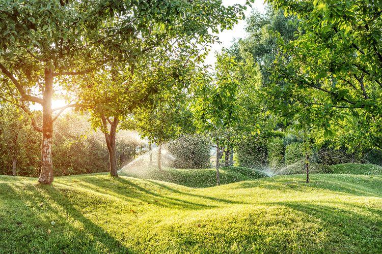 Premeňte záhradu na nepoznanie: Akumulátorový vyžínač sa dostane všade