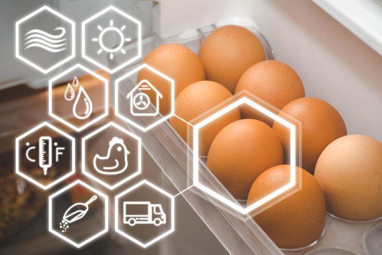 Vajíčka v chladničke