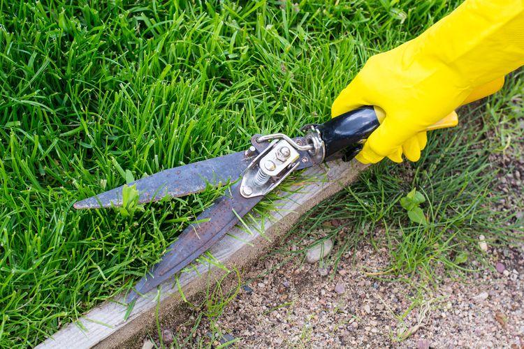 Ako vybrať nožnice na trávu?