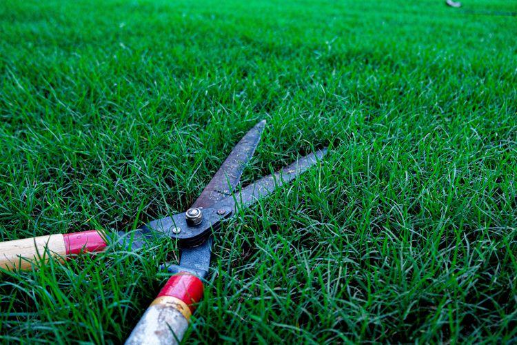 Čepele ručných nožníc na trávu