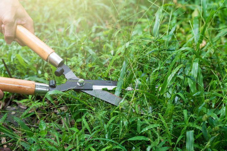 ako vybrať ručné nožnice na trávu