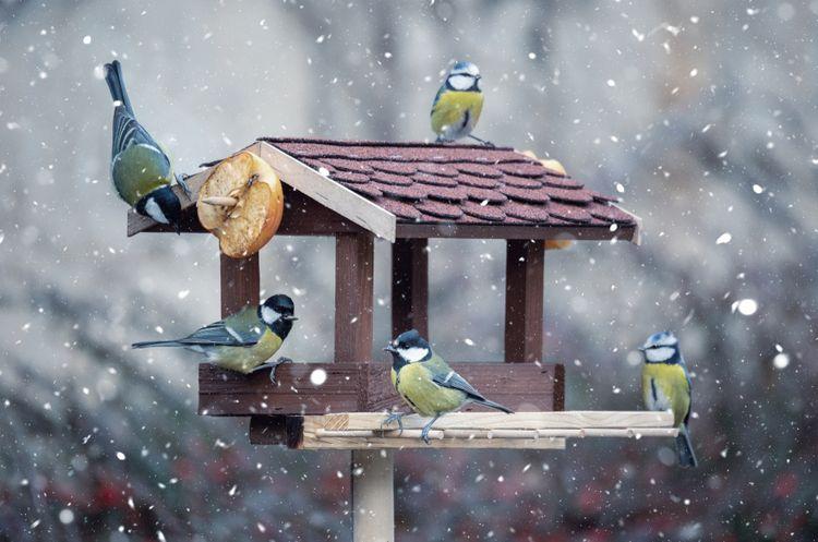 Drevené kŕmidlo pre vtáky v tvare domčeka