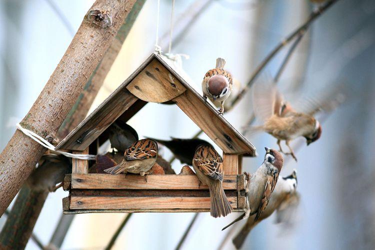 Drevené kŕmidlo pre vtáky