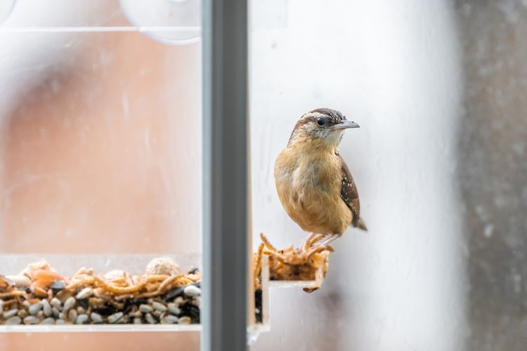 Kŕmidlo pre vtáky na okno