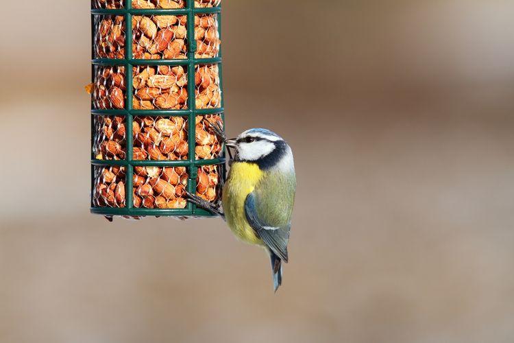 Ako vybrať kŕmidlo pre vtáky?