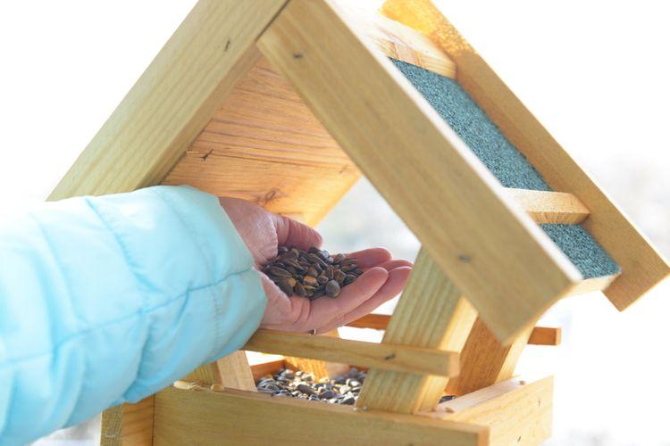 Starostlivosť o kŕmidlo pre vtáky