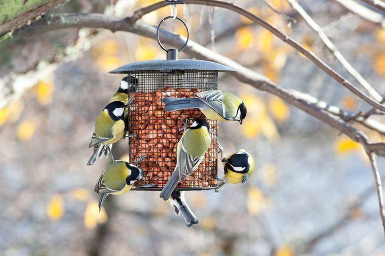 Kovové závesné kŕmidlo pre vtáky