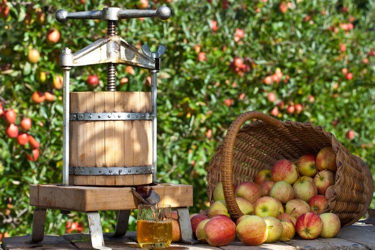 Ako vybrať lis na ovocie