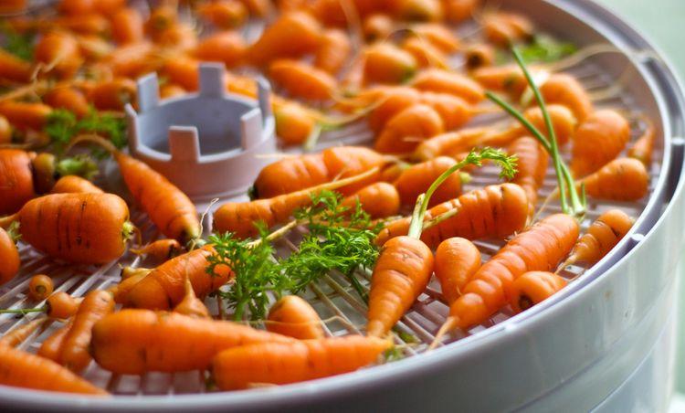 Sušenie mrkvy v sušičke ovocia