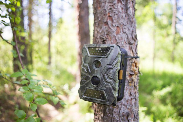 Fotopasca do lesa