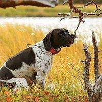 GPS lokátory pre psov a mačky. Recenzie a test poradia GPS obojky pre psov aj mačky